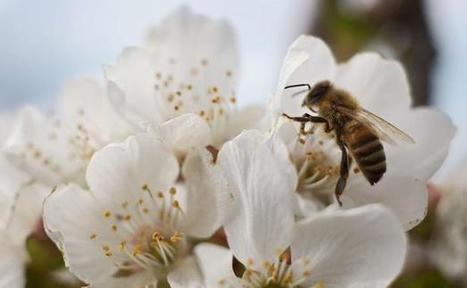 Des abeilles moins en forme à cause de l'environnement | Toxique, soyons vigilant ! | Scoop.it