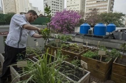 A São Paulo, les détritus des restaurants alimentent leurs propres potagers | MILLESIMES 62 : blog de Sandrine et Stéphane SAVORGNAN | Scoop.it