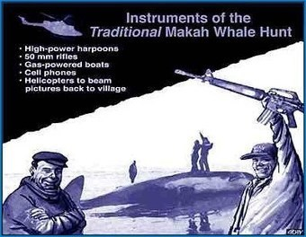 Twelve Reasons to Oppose the Plans by the Makah Whalers to Murder Whales - Sea Shepherd Conservation Society | Introduce new course in schools called COMPASSION | Scoop.it