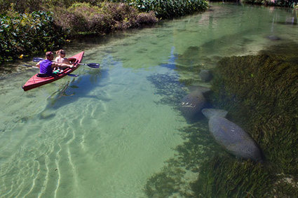 3 Best Places to Snorkel with Manatees | Indigo Scuba | Scoop.it