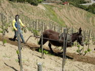 The wines of Catalonia | Wine & Wineries in Catalonia | Scoop.it