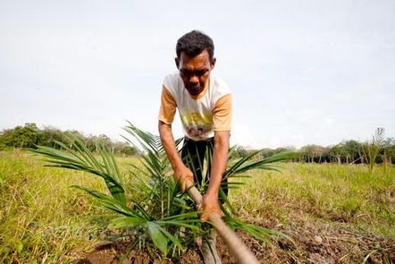 Palm oil need not come at expense of the environment | Life on Earth | Scoop.it