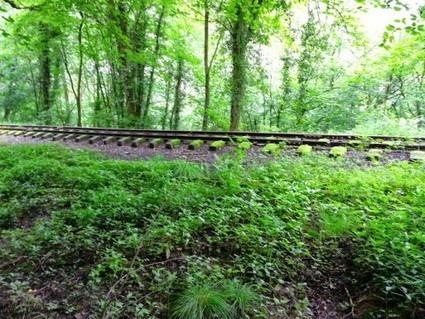 Newburn Farm Kington Walking Route | Walking | Scoop.it