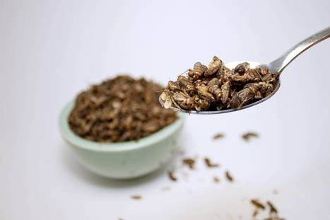 Green Living: Crickets offer protein-packed alternative to traditional meats | Entomophagy: Edible Insects and the Future of Food | Scoop.it