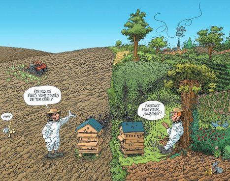 Plaidoyer pour l'agroforesterie de l'association Arbre & Paysages 32   AgroSup Dijon Veille Scientifique AgroAlimentaire - Agronomie   Scoop.it