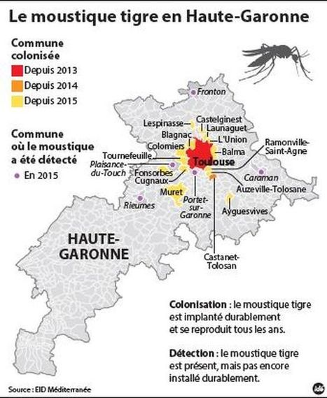 Haute-Garonne. Le moustique-tigre montre ses griffes | Variétés entomologiques | Scoop.it