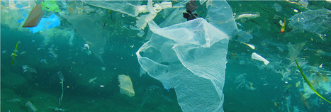 IEEP - Institute for European Environmental Policy - Marine litter – an environmental and economic problem   Marine Litter   Scoop.it