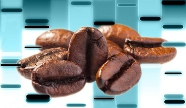 Coffee Genome Sequenced and Annotated | Amazing Science | Scoop.it