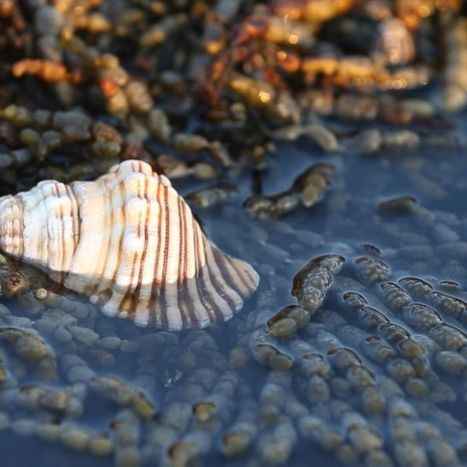Sea snail discovery proving powerful in cancer fight | Year 12 Geography | Scoop.it