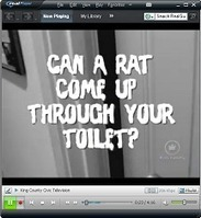 How to get rid of rats | Pest & Rodent Control | Scoop.it