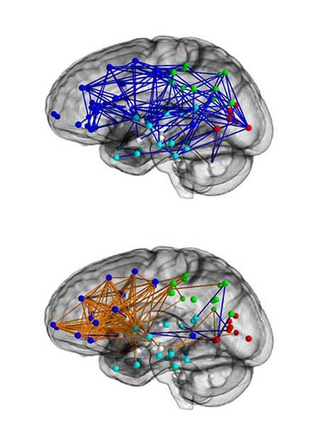 The hardwired difference between male and female brains could explain why men are 'better at map reading'   Marriage Articles   Scoop.it