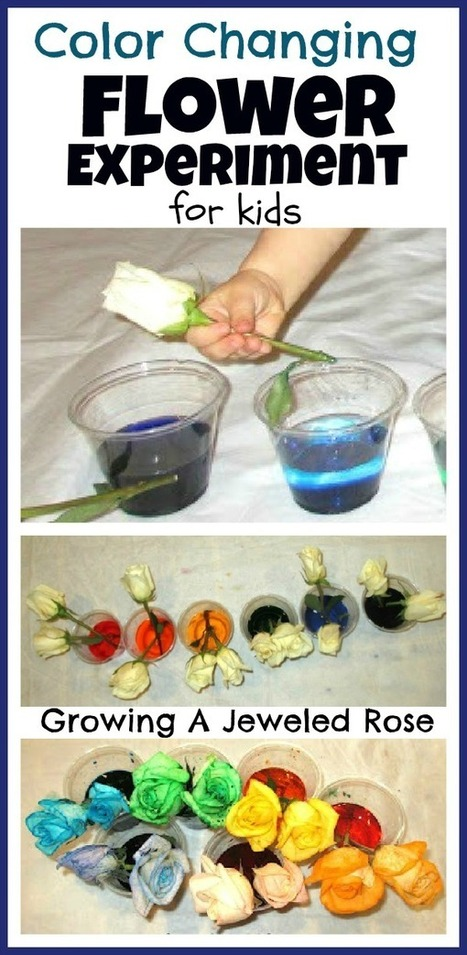 Flower Experiment for Kids ~ Growing A Jeweled Rose | SMART TINKER SCOOPS FOR PARENTS | Scoop.it
