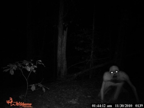 """""""Alien"""" Caught On Deer Cam Is Freaky As Hell   """"Cameras, Camcorders, Pictures, HDR, Gadgets, Films, Movies, Landscapes""""   Scoop.it"""