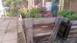 Arizona Gardeners: Cool weather flowers add color and interest to the landscape | Tri-Valley Dispatch (Casa Grande AZ) | CALS in the News | Scoop.it