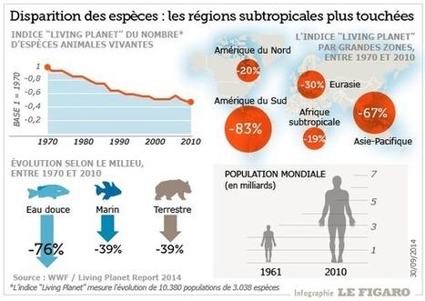 La moitié des animaux sauvages a disparu en moins d'un demi-siècle | Biomimétisme & Biomimicry | Scoop.it