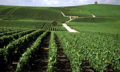 Champagne wine route: top 10 guide | Wine, history and culture... | Scoop.it