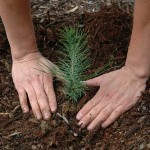 We Can Reforest the Earth   Sustainable Futures   Scoop.it