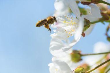 Le déclin des abeilles: quand l'industrie récupère la cause à nos dépens | apiculture31 | Scoop.it