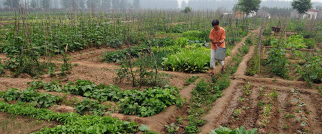 UN Report Says Small-Scale Organic Farming Only Way To Feed The World | Peer2Politics | Scoop.it