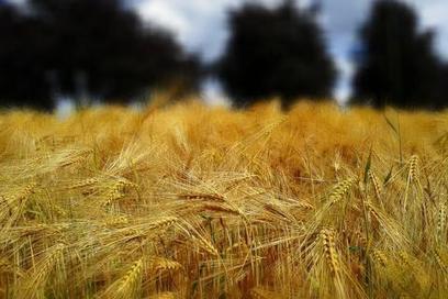 Salon de l'agriculture: et si l'avenir, c'était l'agro-écologie? | CAP21 | Scoop.it
