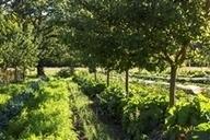 Ferme du Bec Hellouin | Agronomie sur le web | Scoop.it