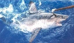 Help Save Endangered Sharks | Shark Week | Scoop.it