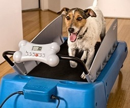 Dog Treadmill - crazyinventions.co.uk | Crazy Inventions | Scoop.it