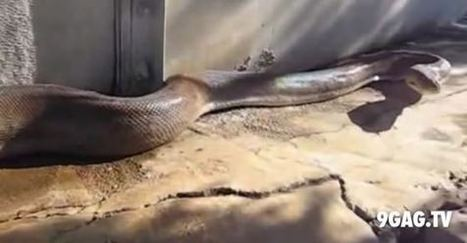 This 17-Second Video Will Scare A Year Off Your Life | 9gag.tv | Random | Scoop.it