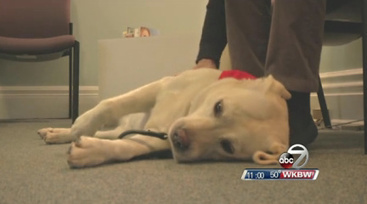 Child Abuse Victims Find Comfort in Therapy Dog | WKBW News 7 | Treatment of Youth & Child Rights | Scoop.it