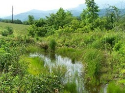 Countering Global Warming with Man Made Wetlands - Organic Connections | Environmental Innovation | Scoop.it