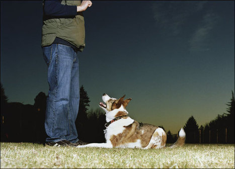 The fundamentals of dog training salt lake city for your dogs - My Glam Network | Dog training utah | Scoop.it