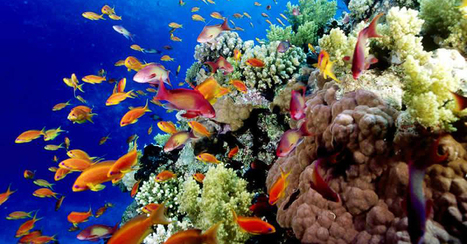 Help Save the Great Barrier Reef   Coal Seam Gas   Scoop.it