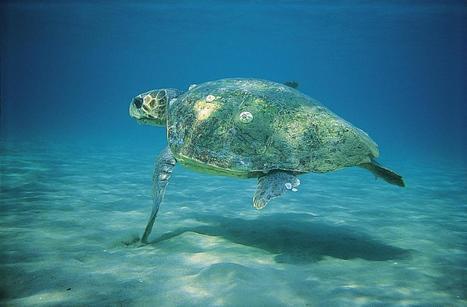 Χωματερή το εθνικό θαλάσσιο πάρκο - ThePressProject | Η Βιολογία στην Εκπαίδευση | Scoop.it