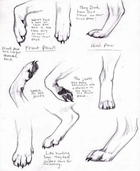 Wolf Paws Drawing Reference | Drawing References and Resources | Scoop.it