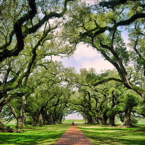Walking on the path at Oak Alley | Oak Alley Plantation: Things to see! | Scoop.it