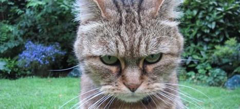Pourquoi nous ressentons le besoin de nous mettre en colère sur ... - Slate.fr | Cerveau intelligence | Scoop.it