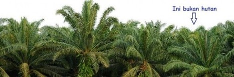 Of Palm Oil and Extinction | Peak Oil | Scoop.it