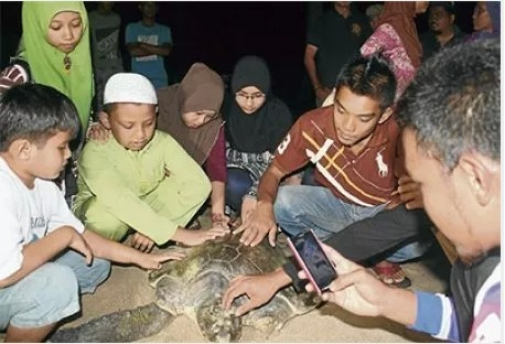 Rare Turtle Landing Makes Waves In Bachok | All about water, the oceans, environmental issues | Scoop.it