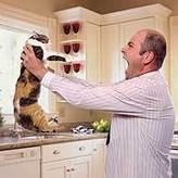 5 Reasons Not to Punish Your Cat   Cat Club Elite News   Scoop.it