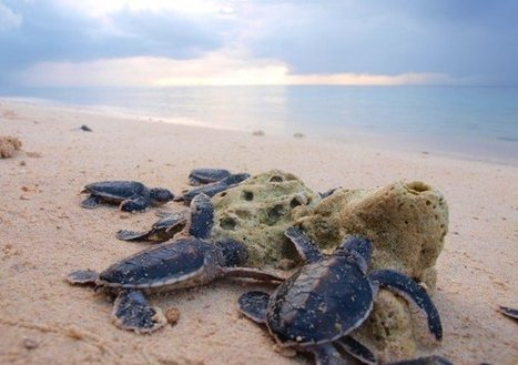 "Ecotourism projects eyed for Tawi-Tawi's Turtle Islands (""pushing eco-tourism w/o disturbing habitats"") 