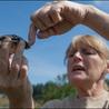 Turtle Conservation News for KTCS