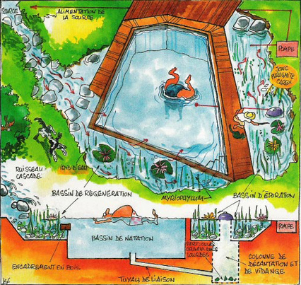 Nagez BIO dans une piscine 100% naturelle | Jardin écologique | Scoop.it