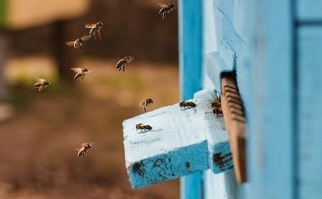 Label Abeille : une ruche connectée qui soutient l'écologie et l'emploi | Geeks | Scoop.it