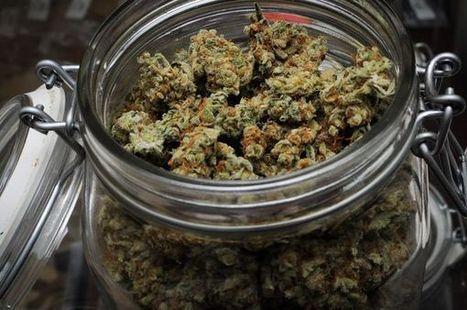 Voici comment le THC du cannabis détruit les cellules cancérigènes sous le microscope | Crakks | Scoop.it