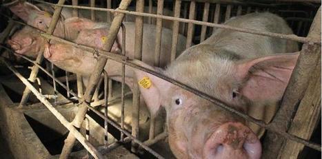 92 % des Français veulent savoir comment sont élevés les animaux qu'ils consomment   Toxique, soyons vigilant !   Scoop.it