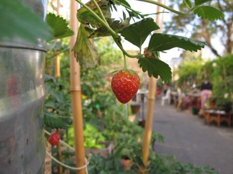 Quand l'agriculture urbaine réinvente la ville | Agriculture Urbaine et gouvernance alimentaire | Scoop.it