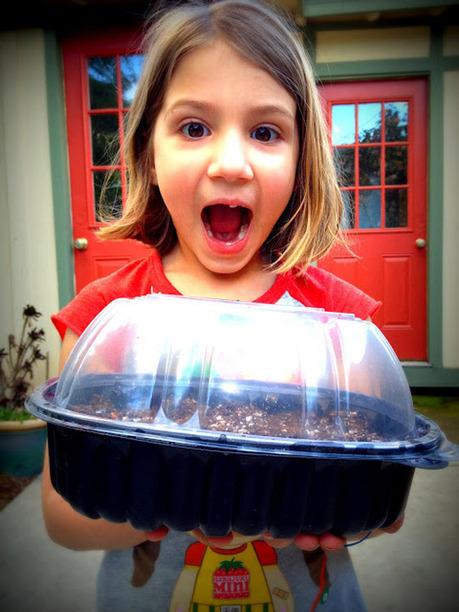 Turn Plastic Chicken Containers into Indoor Greenhouses   Read Between The Limes | Garden Grunt | Scoop.it