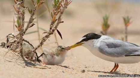 UK among worst in wildlife league - BBC News   Wildlife and Conservation   Scoop.it