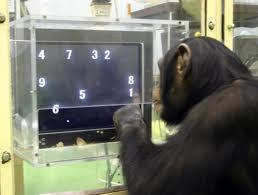 Chimpanzees can far outperform humans in some mental tasks, including rapidly memorising and recalling numbers | Science Communication from mdashf | Scoop.it