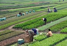 Real estate firms eye agricultural investments in Vietnam - Far Eastern Agriculture | Vietnam: Inclusive & Sustainable Agriculture | Scoop.it